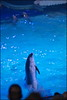 Dolfinarium & Frans Bauer _ 52 (@2008) Tags: people holland netherlands zoo dolphin dolfinarium harderwijk dolfijn fransbauer a900 zeiss135mmf18 sal135f18z sal135f18za