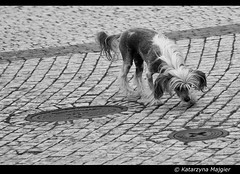 A dog? (Danio ()) Tags: blackandwhite bw white black blancoynegro monochrome photography monocromo foto noiretblanc monochrom fotografia danio czarne biae  czarnobiae czarnobialy schwarzundweis   monochromepicture fotografiaczarnobiaa   katarzynamajgier