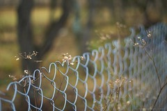 Love & fence friday.. (icemanphotos) Tags: flower love nature beautiful canon fence photography eos interestingness amazing interesting fantastic wire view heart bokeh background joy happiness pointofview iceman hff bokehlicious twittertuesday icemanphotos