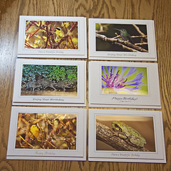 Nature Photo Birthday Greeting Cards (Set of 6) (Becca's Nature) Tags: birthday original flower tree nature cards photography photo photos handmade unique frog made american happybirthday etsy raccoon common birthdaycards greeting warbler originalphotos greetingcards cardstock naturephotos birthdaygreetings photocards naturecards wwwbeccasnatureetsycom yellowthroate