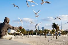 Seabirds Food (Aamir Jaffar) Tags: trees sea sky food man bird eye girl skyline clouds flying dubai uae eat seabirds tallestbuilding burjkhalifa seantportrate