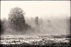 Fog'n'Frost (warmianaturalnie) Tags: bw white black tree fog frost meadow mgła mróz warmia drzewo 2011 łąka biały czarno