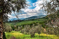 Paradise In Italy (NoNickMan) Tags: italy landscape paradise view tuscany olivetree 1585 eos7d mygearandme ringexcellence blinkagain sliderssunday flickrstruereflection1