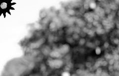 (alotlikelove4) Tags: california ca blackandwhite bw blackwhite nikon bokeh laguna orangecounty nikkor dslr oc windchime lagunahills chime ruleof3rds ruleofthirds orangecountyca nikondslr d5000 flickraward lagunahillsca nikond5000