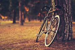 Resting (In my entirety) Tags: park trees bike digital canon eos rebel 50mm kiss afternoon f14 usm ef xsi x2 450d