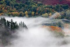La Niebla (Mr.Groka (Gorka Valencia)) Tags: tree landscape arbol rboles arboles paisaje rbol niebla navarra etxalar