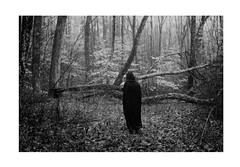 (Courtney Sinclair) Tags: blackandwhite tree nature girl dark woods foggy stormy fallen cape