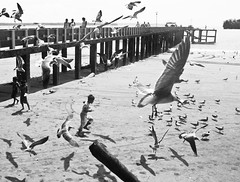 bw (VMR) Tags: naturaleza color libertad mar colombia amor paz animales palomas aire pacifico belleza blancos negros