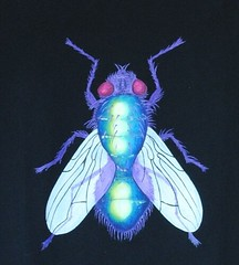 mosca (donghrr) Tags: