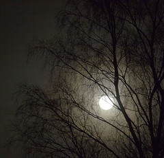 Full moon in local park. (ihaveacatcalledjesus) Tags: moon tree silhouette night canon leeds full 550