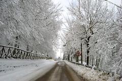 Viale innevato ([francescomas]) Tags: alberi basilicata neve vulture nevicata lucania viale forenza inverno2012