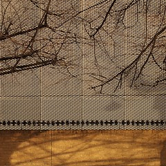 screen (Cosimo Matteini) Tags: city shadow tree london pen grate 50mm olympus blackfriars f18 zuiko cityoflondon m43 mft newbridgestreet epl1 cosimomatteini