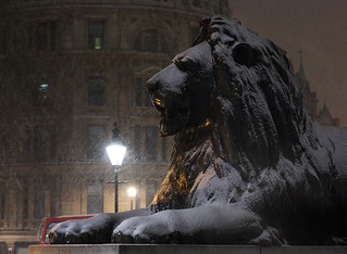 Lion in a blizzard, Trafalgar Square, Westminster, London, UK