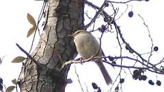 (Polotaro) Tags: flower bird nature pen olympus  sakura   zuiko    3               fzuiko300mmf45 epm2