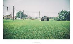 田中 ‧ 人家 (楚志遠) Tags: nikon f25 ai 稻田 105mm 楚志遠 凍先生