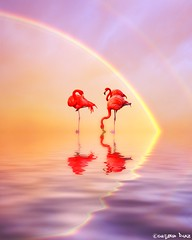 Double Rainbow!  (gusdiaz) Tags: sunset reflection art nature beautiful beauty digital photomanipulation photoshop sunrise spring colorful arte flamingos aves pastels hermoso reflejos coth mextures