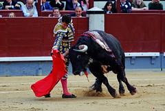 Posada de Maravillas, Las Ventas (Fotomondeo) Tags: madrid espaa spain bull bullfighter toros bullfight toro bullring matador torero plazadetoros corridadetoros lasventas posadademaravillas fujifilmxm1