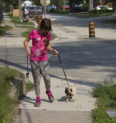 Walk (Deep-Fried Goodness) Tags: dog cute pug dexter