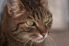 The Cat (CS-Fotografie Bad Aibling) Tags: nature cat canon tiere natur pussy katze pussycat haustier kater eos6d canoneos6d