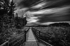 Enter the dark path (jarnasen) Tags: d810 nikon 1635mmf4 wideangle nikkor path mono monochrome bw longexposure le leefilters superstopper nd15 leesuperstopper extreme ndfilter movingclouds movement nordiclandscape landscape alley reed wind trees outdoor nature scandinavia sweden sverige weather mood moody atmosphere dark copyright jrnsen jarnasen conversion processed lake rosenkllasjn jetty pier daylight daytime shadows light lighting bnw