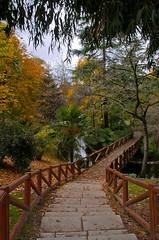 Siguiendo el camino (Carhove) Tags: madrid autumn españa tree verde arbol spain madera stair camino path natura otoño escaleras escalones parquedelbuenretiro ocres nikond80 carhove olétusfotos mygearandme mygearandmepremium greennaturaleza aboveandbeyondlevel1