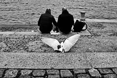 . (ngravity) Tags: street bw bird canon copenhagen denmark blackwhite couple candid streetphotography nocrop eos50d makrygiannakis