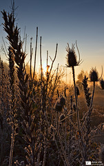 Frosty Morning (Daniel Wildi Photography) Tags: morning light sun cold nature backlight sunrise river switzerland walk frosty aar rubigen 2011 renatured cantonbern hunzigenau danielwildiphotography