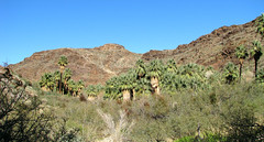 Palm Canyon Trail - 03 Photo