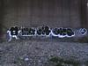 (D Mack1) Tags: japan graffiti want mq graff qp skid bbb dms 246 querenciapeligrosa gkq
