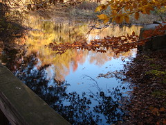 Autumn Waters (robertvena) Tags: autumn trees lake fall water colors leaves reflections seasons seasonal foliage