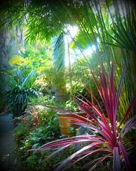 ~~International Palm Society Meeting #1~~ (TravelsThruTheUniverse) Tags: tropicalplants tropicalflowers exoticgardens zengardens tropicalgardens tropicalfoliage californiagardens subtropicalgardens 100commentgroup tropicallandscapes subtropicallandscapes flickrstruereflection1 internationalpalmsocietymeetnortherncaliforniachapter
