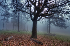 Boira (christian&alicia) Tags: fog forest landscape nikon natural sigma natura catalonia catalunya 1020 sant hdr feliu boira catalogne collsacabra d90 espai guilleries tavernoles christianalicia savasona ilobsterit