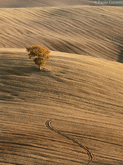 Layers & Lines #6 (Corsaro078) Tags: tree landscape tuscany toscana paesaggio wondersofnature sanquiricod0orciapaesaggiolandscapealbero