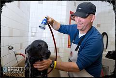 Monday is Dog Wash Day - Day 346 of 365 (SRivera) Tags: dog flickr canine sugar page canonef1740mmf4lusm offcameraflash strobist ononephotoframe canon430exiispeedlite dailyuploadproject cowboystudioheavydutyphotographyvideolbracket pixel36m10ftettloffcamerashoecord
