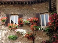 itlia (Graa Vargas) Tags: italy flower window assisi assis itlia graavargas 2011graavargasallrightsreserved