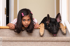 Sisters (wmliu) Tags: people dog girl stairs puppy kai germanshepherd kilroywashere kanine wmliu
