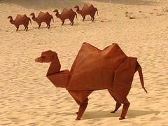 Camel (John Montroll) (Danielle Verbeeten) Tags: paper origami camel papier paperfolding montroll kameel johnmontroll papiervouwen