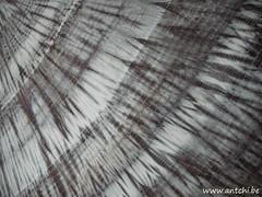 shibori eucalyptus et sumac