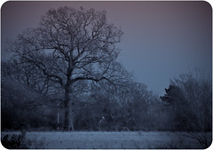 Dusk @ Fakenham, North Norfolk, UK (X-S1 Dave) Tags: winter tree garden fuji dusk bare north norfolk fakenham sculthorpe blinkagain hs20exr