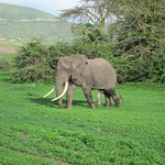 "Five-Legged Elephant <a style=""margin-left:10px; font-size:0.8em;"" href=""http://www.flickr.com/photos/14315427@N00/6605150621/"" target=""_blank"">@flickr</a>"