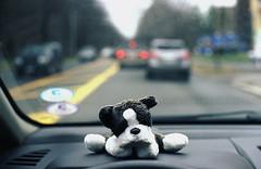 Day Eight (thp365) Tags: cambridge dog film car 35mm canon ma photography gold photo driving kodak 200 stuffedanimal commute terry 365 kodakgold200 canonftql thp ql thisistoday film365 toddhpage