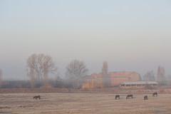 caposile 3855 (ilcaimano) Tags: horses cold sunrise alba cavalli caposile