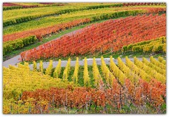 Autumn Vineyard (Habub3) Tags: park street travel autumn red holiday color green rot fall texture nature leaves lines yellow germany garden landscape deutschland vineyard nikon stuttgart path urlaub herbst natur vine gelb grn blatt landschaft garten bunt vacanze 2012 weg reise wein farben weinberg d300 strase remstal weinstadt habub3 mygearandme
