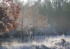 A crisp frosty morning (yvonnepay615) Tags: uk winter nature lumix frost norfolk panasonic g1 45mm eastanglia wow1 wow2 wow3 munford