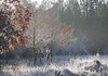 A crisp frosty morning (yvonnepay615) Tags: uk winter nature lumix frost norfolk panasonic g1 45mm eastanglia wow1 wow2 wow3 munford
