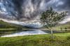 My Favourite Tree (Fraser Ross) Tags: scotland highlands hdr invernessshire photomatix sigma1020 mullardoch cannich glencannich lochsandglens topazadjust topazdenoise topazsoftware mygearandme photoshopcs5 mygearandmepremium mygearandmebronze mygearandmesilver mygearandmegold mygearandmeplatinum topazinfocus