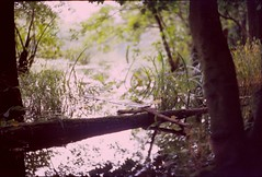 Autumn, Golden Trees (Paul Aeneas) Tags: film analog forest buchenwald bokeh fluid wald ostsee spiegelung ruegen exa 1b ihagee