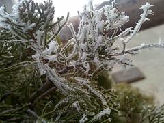 ...segni dell'inverno (_mc-) Tags: brina piante inverno freddo gennaio ghiaccio