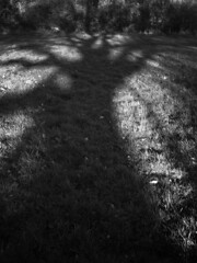 shadow (the incredible how (intermitten.t)) Tags: shadow tree field hedge 3660 bigfield hayfeild 16012012