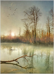Fishing rod (Jean-Michel Priaux) Tags: autumn trees winter mist france tree art nature water fog forest photoshop automne painting reflet reflect alsace paysage hdr myst savage sauvage ried rserve marcage priaux rhinau mygearandme ringexcellence daubensand flickrstruereflectionlevel1